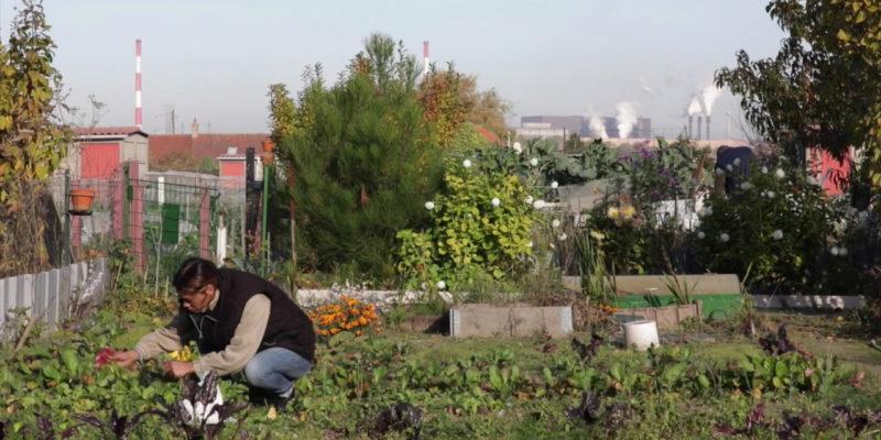 Un jardin ouvrier